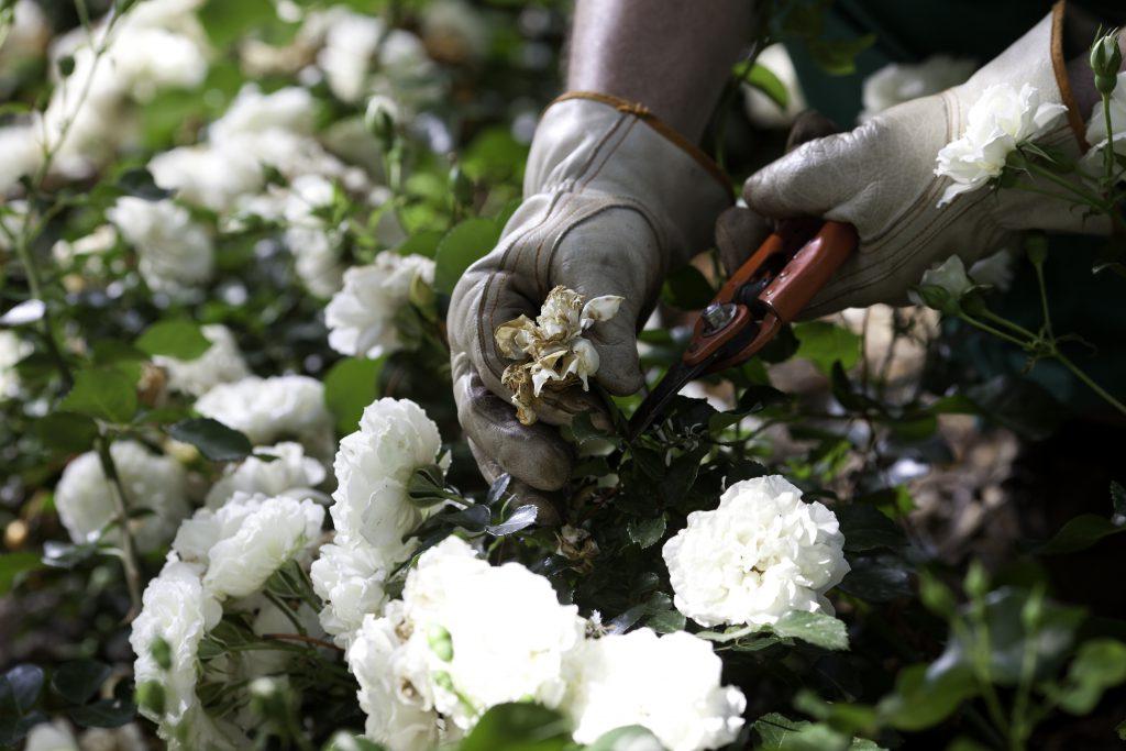 Serveis de jardineria